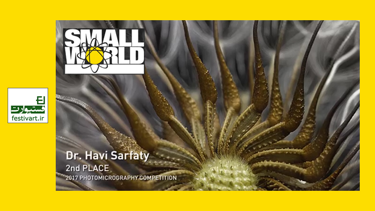 فراخوان عکاسی میکروسکوپی و ویدئوی «دنیای کوچک نیکون ۲۰۱۸»