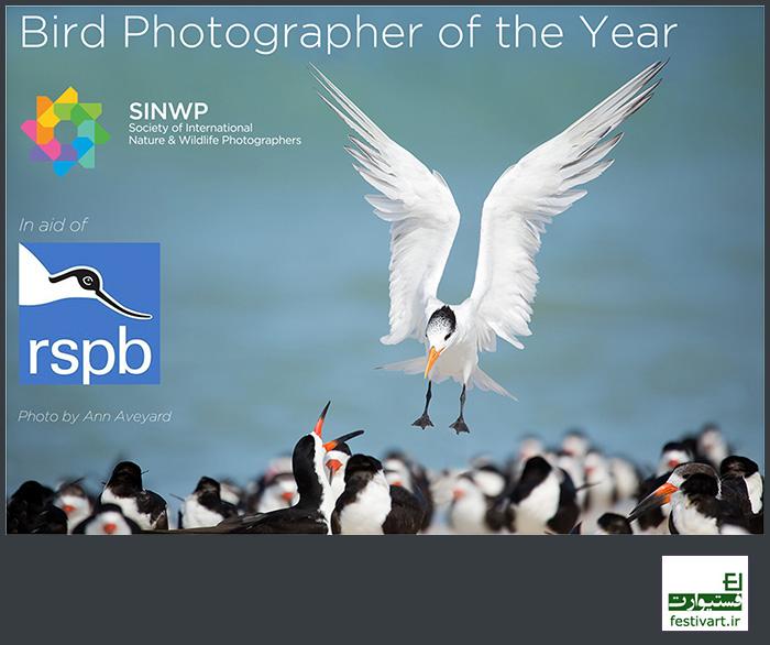 فراخوان بین المللی مسابقه سالانه عکاسی پرندگان سال ۲۰۱۸