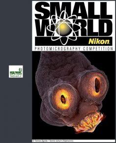 فراخوان رقابت بین المللی عکاسی دنیای کوچک نیکون ۲۰۱۹