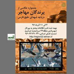 فراخوان جشنواره عکاسی از پرندگان دریاچه شهدای خلیج فارس