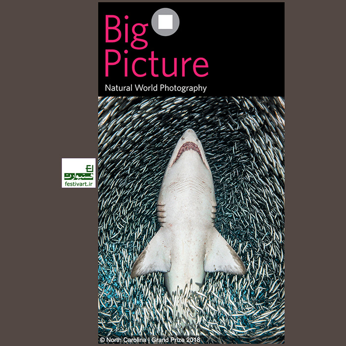 فراخوان رقابت بین المللی عکاسی BigPicture Natural 2019