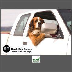 فراخوان رقابت بین المللی عکاسی اتومبیل ها و سگ ها ۲۰۱۹