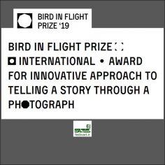 فراخوان رقابت بین المللی عکس پرنده در پرواز ۲۰۱۹