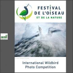 فراخوان رقابت بین المللی عکاسی Wildbird ۲۰۲۰