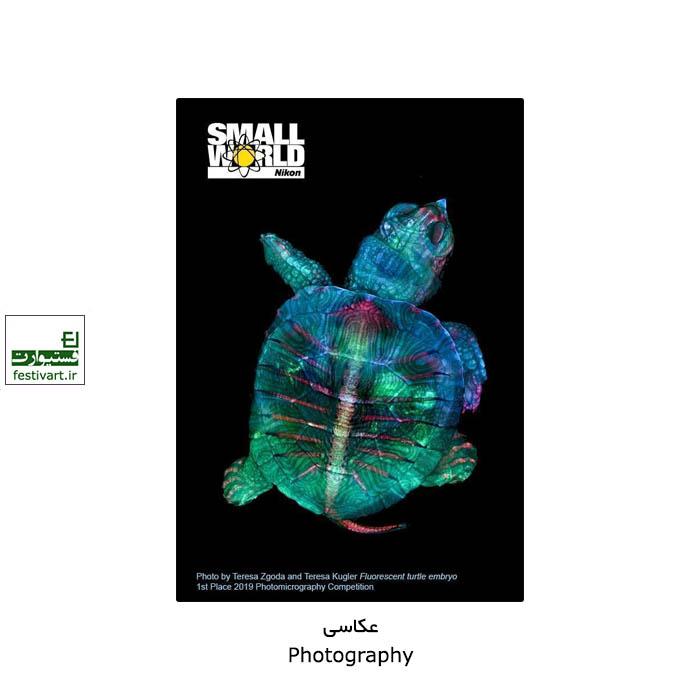 فراخوان رقابت بین المللی عکاسی دنیای کوچک نیکون ۲۰۲۱