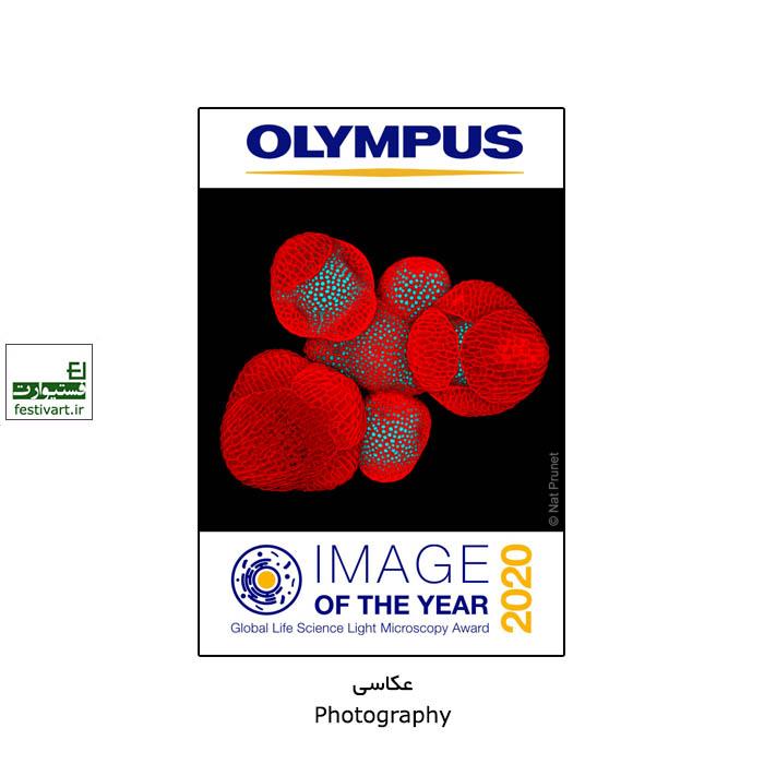 فراخوان رقابت بین المللی عکاسی Olympus ۲۰۲۰